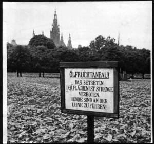 Kriegsschauplatz-Wien